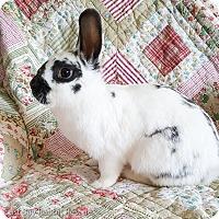 Adopt A Pet :: Lola - Livermore, CA