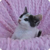 Adopt A Pet :: GIGI - Newport Beach, CA