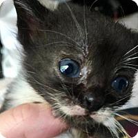 Adopt A Pet :: Mustache - Northeast, OH