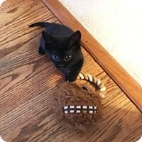 Adopt A Pet :: Scarlett - Harrisonburg, VA