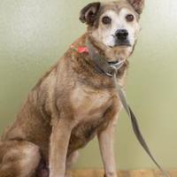 Adopt A Pet :: Esparanza - West Allis, WI