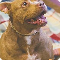 Adopt A Pet :: Starla - Evansville, IN