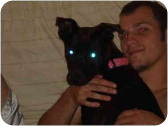 Labrador Retriever/Labrador Retriever Mix Dog for adoption in Overland Park, Kansas - Lilly