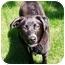 Photo 3 - Labrador Retriever/Retriever (Unknown Type) Mix Dog for adoption in Salem, New Hampshire - Wolf-Etta
