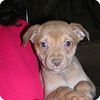 Adopt A Pet :: Tessie - Glastonbury, CT