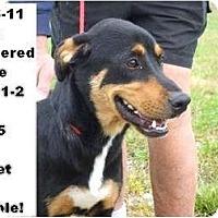 Adopt A Pet :: # 515-11 @ Animal Shelter - Zanesville, OH