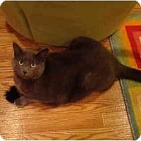 Adopt A Pet :: Ben-PETSMART - Muncie, IN