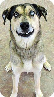 Catahoula Leopard Dog Mix Dog for adoption in Fremont, Nebraska - Kole