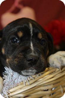 Hound (Unknown Type) Mix Puppy for adoption in Waldorf, Maryland - Demi