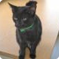 Adopt A Pet :: Rose - East Smithfield, PA