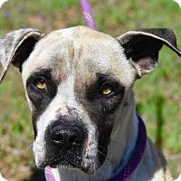Adopt A Pet :: Clarence - Payson, AZ