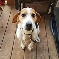 Adopt A Pet :: Remy - Millersville, MD