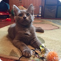 Adopt A Pet :: Willow - La Canada Flintridge, CA