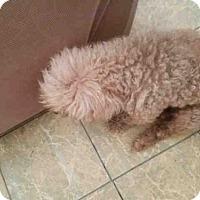 Adopt A Pet :: BEN - San Antonio, TX