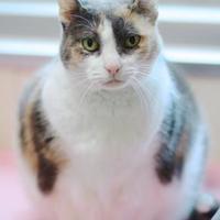 Adopt A Pet :: Mishou - Charleston, SC