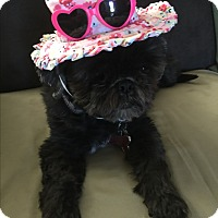 Adopt A Pet :: Lexie - Playa Del Rey, CA