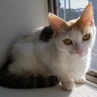 Adopt A Pet :: Rose - Manteo, NC