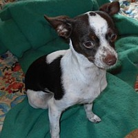 Adopt A Pet :: Miranda - Albany, OR