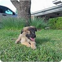 Adopt A Pet :: Cash - Courtesy Post - Glastonbury, CT