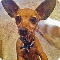 Adopt A Pet :: KOBI - AUSTIN, TX