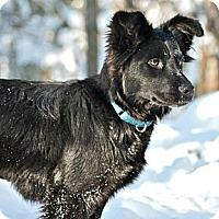 Adopt A Pet :: Jessa - Hastings, NY