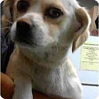 Adopt A Pet :: Kendell - San Diego, CA