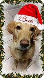 Labrador Retriever Dog for adoption in Columbia, Tennessee - Buck **ADOPTION PENDING**