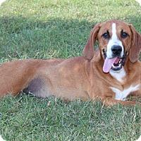 Adopt A Pet :: Bristol - Salem, NH
