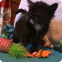 Adopt A Pet :: Izzy - Orlando, FL