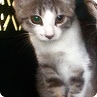 Adopt A Pet :: Rena - Duluth, MN