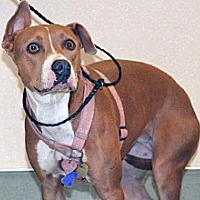 Adopt A Pet :: Holly - Wildomar, CA