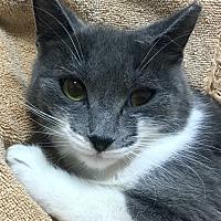 Adopt A Pet :: Priscilla - Harrison, NY