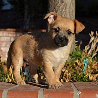 Adopt A Pet :: Bunny - Simi Valley, CA