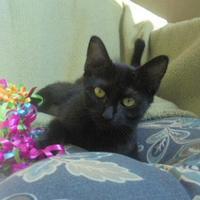 Adopt A Pet :: Elektra - Marshalltown, IA