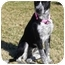 Photo 3 - Schnauzer (Standard)/Terrier (Unknown Type, Small) Mix Dog for adoption in Portsmouth, Rhode Island - Oreo