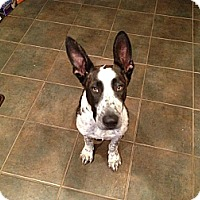 Adopt A Pet :: Reeses - Hagerstown, MD