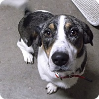 Adopt A Pet :: Nora - Geneseo, IL