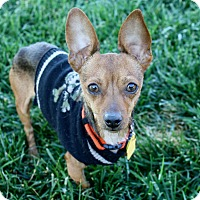 Adopt A Pet :: Calvin - 7.2 lbs! - Yorba Linda, CA