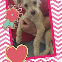 Adopt A Pet :: Gertie - Scottsdale, AZ
