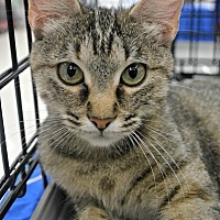 Adopt A Pet :: Jaela - Eureka, CA