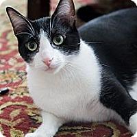 Adopt A Pet :: April - Chicago, IL