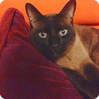 Adopt A Pet :: Sanu - Alexandria, VA