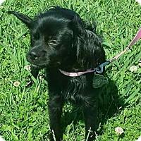 Adopt A Pet :: Mya - Sugarland, TX