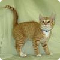 Adopt A Pet :: Kolby - Powell, OH