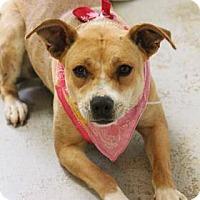 Adopt A Pet :: Trixie - Lebanon, CT