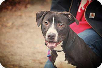 Labrador Retriever Mix Dog for adoption in Brookhaven, New York - Jack Skellington