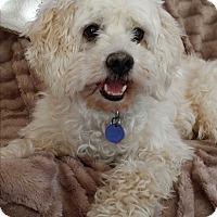 Adopt A Pet :: Robbie - Santa Barbara, CA