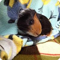 Adopt A Pet :: Zayden - Coral Springs, FL