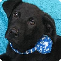 Adopt A Pet :: Teddy Scott - Cuba, NY