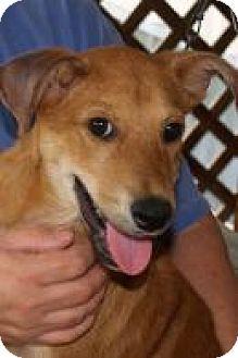 Hound (Unknown Type) Mix Dog for adoption in Rexford, New York - Jovi